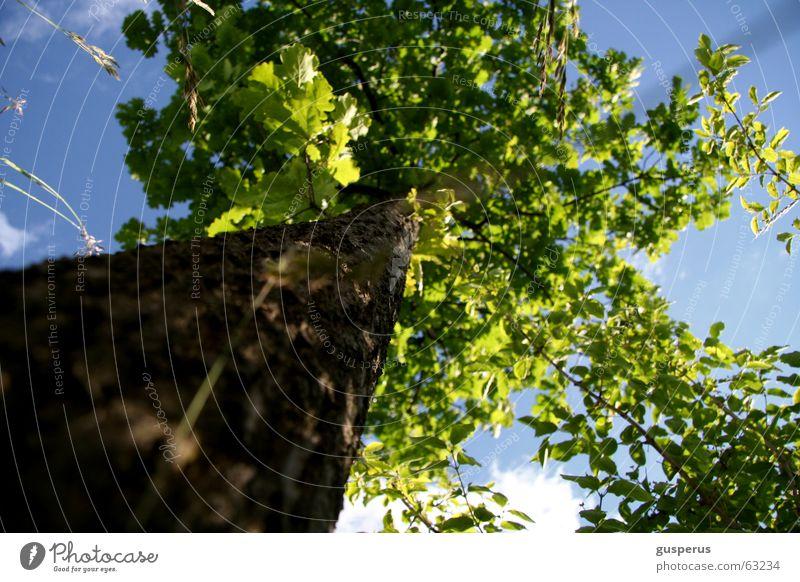 { AMEISEN WELT } Baum Blatt Eiche Gras grün schön Himmel Baumstamm unter dem baum liegen Wetter wie mans nimmt tree tree trunk leaf oak grass