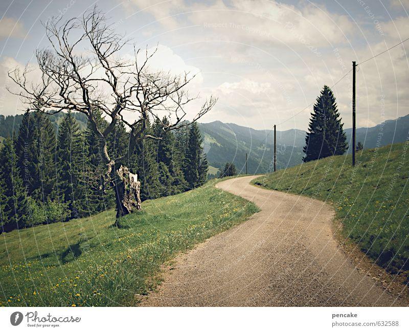 wanderlust Natur Landschaft Urelemente Erde Sommer Schönes Wetter Baum Gras Wald Alpen Wege & Pfade Zeichen genießen Blick wandern ästhetisch bizarr Erholung