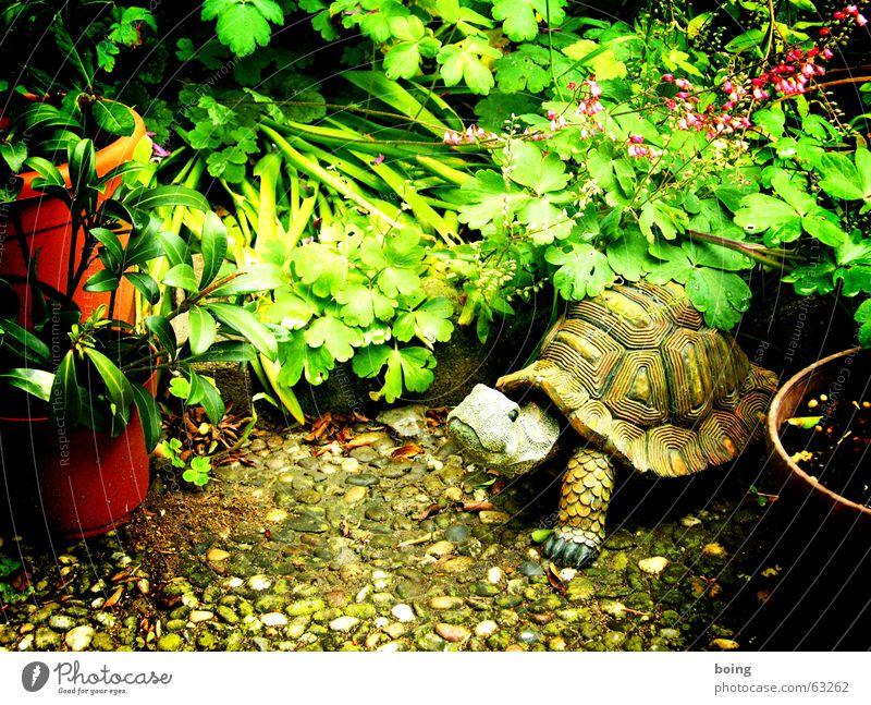 garden gnome turtle in the backyard Garten Park Dekoration & Verzierung Terrasse Blumentopf Gartenbau Kochen & Garen & Backen Schildkröte Gartenzwerge Betonplatte Oleander