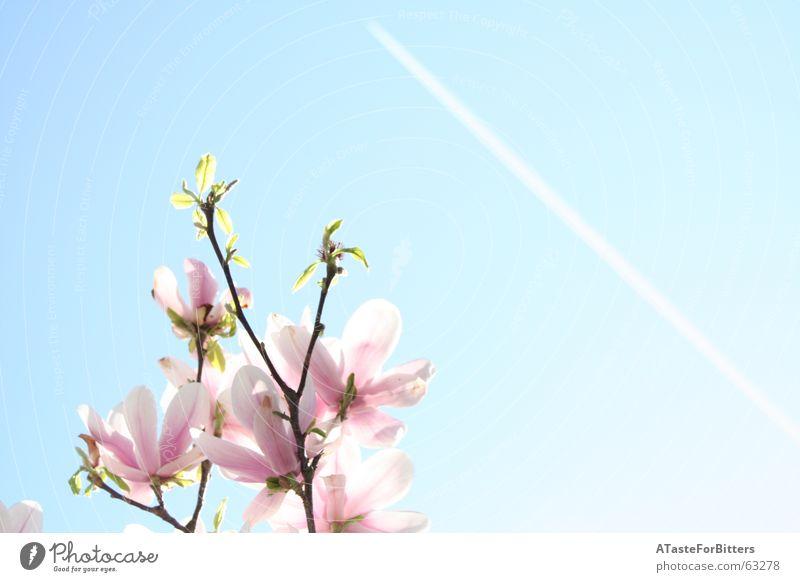 Wann wirds mal wieder richtig Sommer Baum Sonne Blume blau Ferne Blüte Frühling Freiheit rosa Flugzeug Klarheit Ast Kondensstreifen