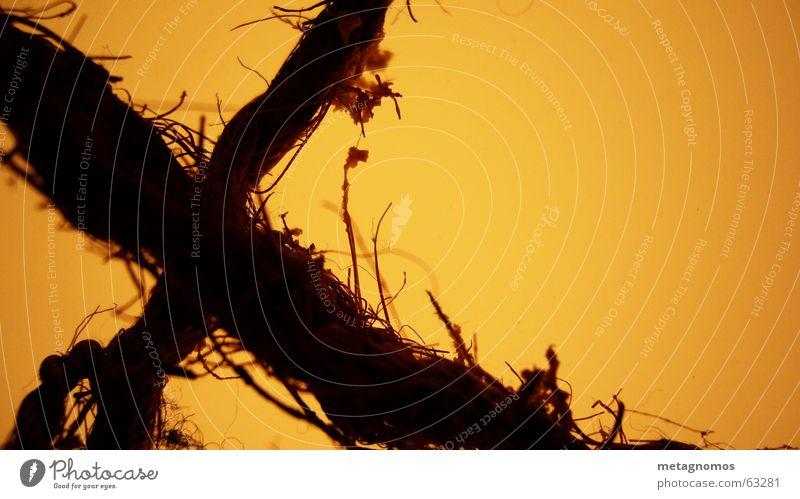 ausgext Beleuchtung orange Seil Schriftzeichen Buchstaben Zeichen Symbole & Metaphern Faser Lateinisches Alphabet