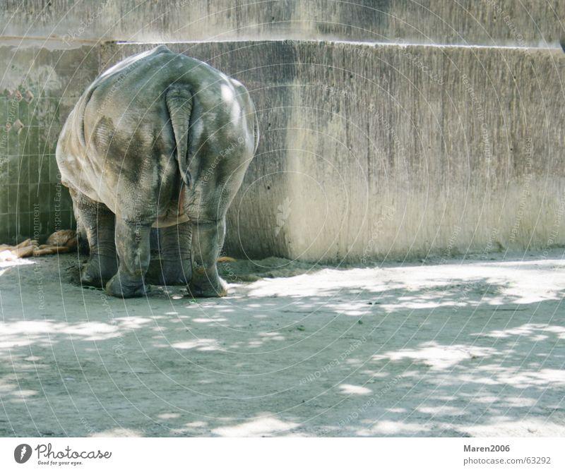 Hübscher Hintern Nashorn Zoo Tier Hinterteil dick Barcelona lustig Einsamkeit Fett dickhäuter