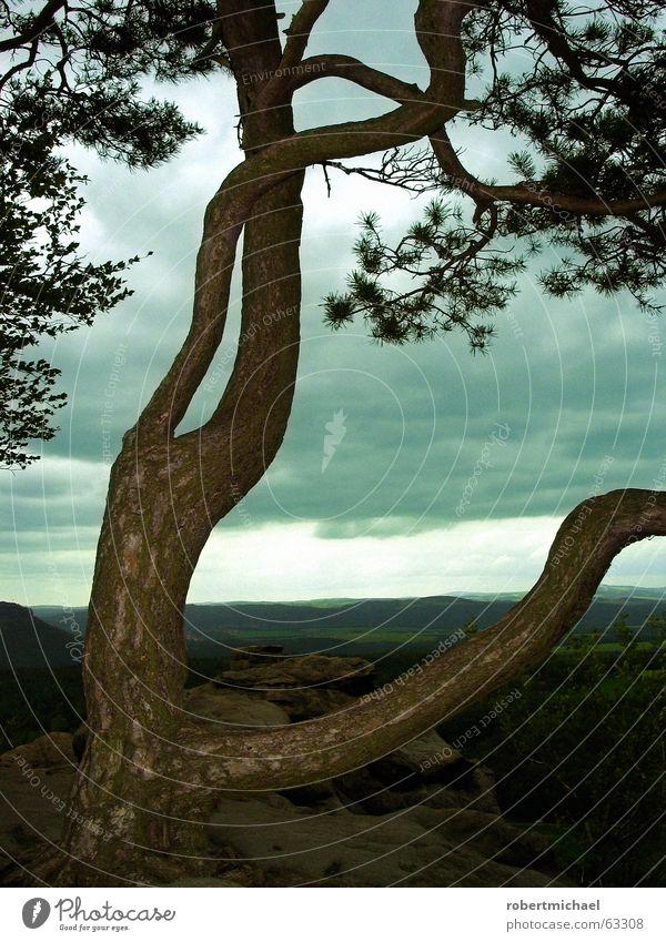 Fällt uns der Himmel auf den Kopf? Baum Wolken Wald Sandstein Sächsische Schweiz Sachsen Aussicht Baumrinde schlechtes Wetter Wind Regenwolken Naturphänomene