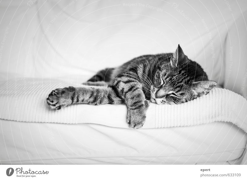 Geh hin zur Ameise, du Fauler! Erholung ruhig Katze 1 Tier Sofa liegen schlafen Häusliches Leben niedlich weich Zufriedenheit Vertrauen Geborgenheit