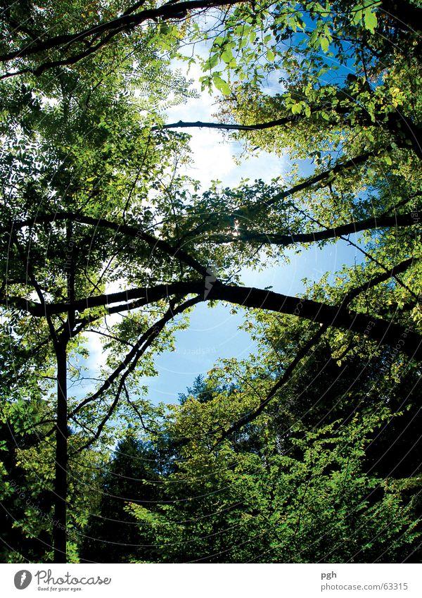 Holt mich hier raus Baum grün Blatt Urwald Himmel blau Ast Zweig Blick nach oben