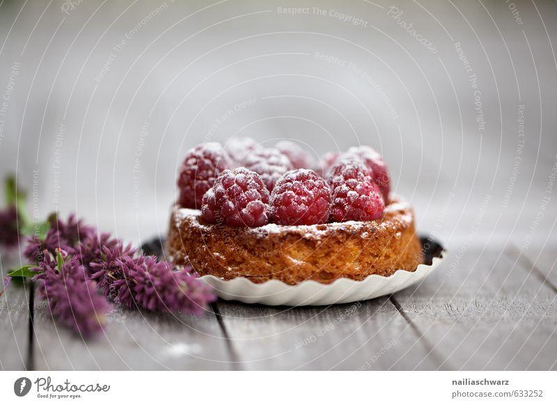 Raspberry Tarte Lebensmittel Frucht Teigwaren Backwaren Süßwaren tart Kuchen obstkuchen himbeerekuchen Himbeeren Ernährung Essen Bioprodukte Blume Blüte