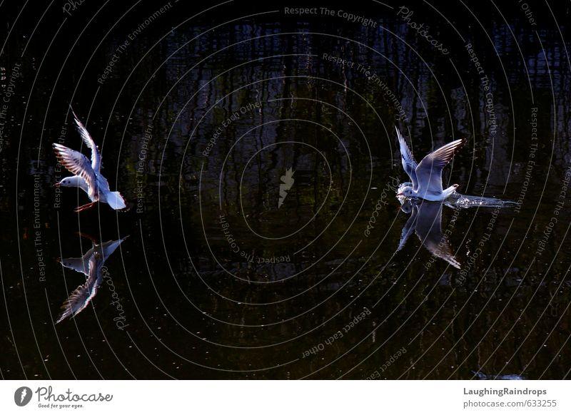 Möwensee I blau weiß Wasser schwarz Schwimmen & Baden fliegen Tanzen violett Schwan