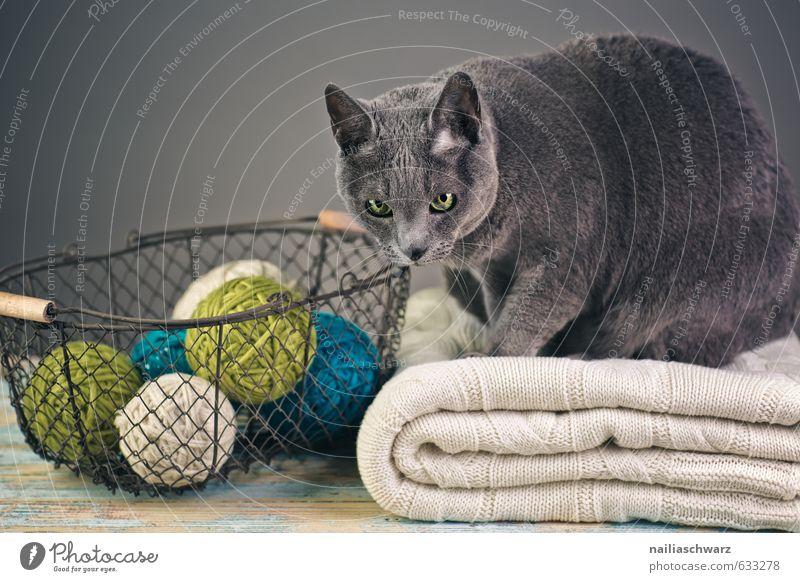 Russian Blue elegant Pullover Tier Haustier Katze russisch blau 1 Korb Wolle Knäuel Drahtkorb Decke beobachten Erholung Blick kuschlig natürlich Neugier