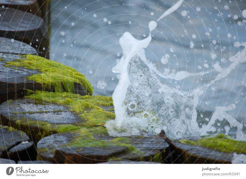 Wasser Algen See Meer Wellen Ferien & Urlaub & Reisen Holz Gischt grün braun nass frisch Erfrischung Ostsee spritzen blau Wassertropfen Natur kribbe stacke