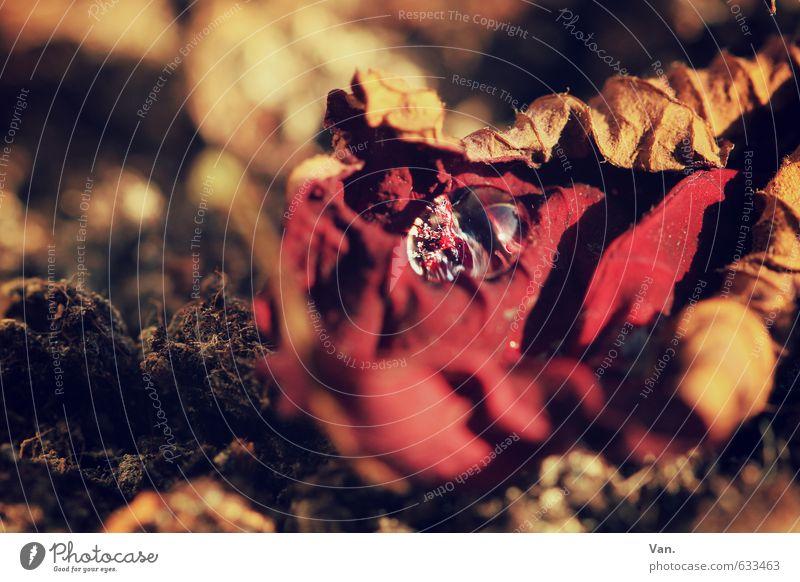 und noch ein Tröpfchen Natur Wasser Pflanze rot Blatt gelb Herbst Erde Wassertropfen welk