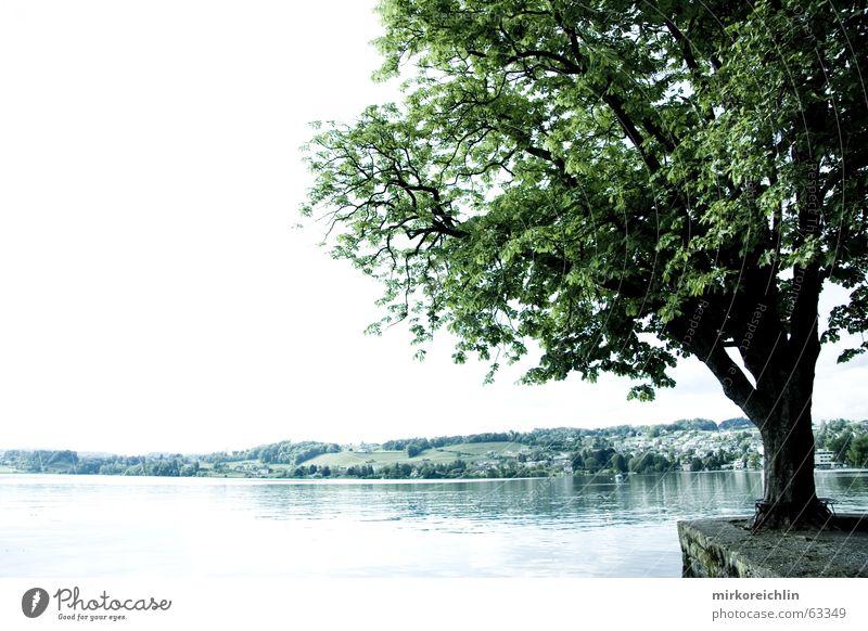 The Tree Baum See grün sea lake tree bigway hell