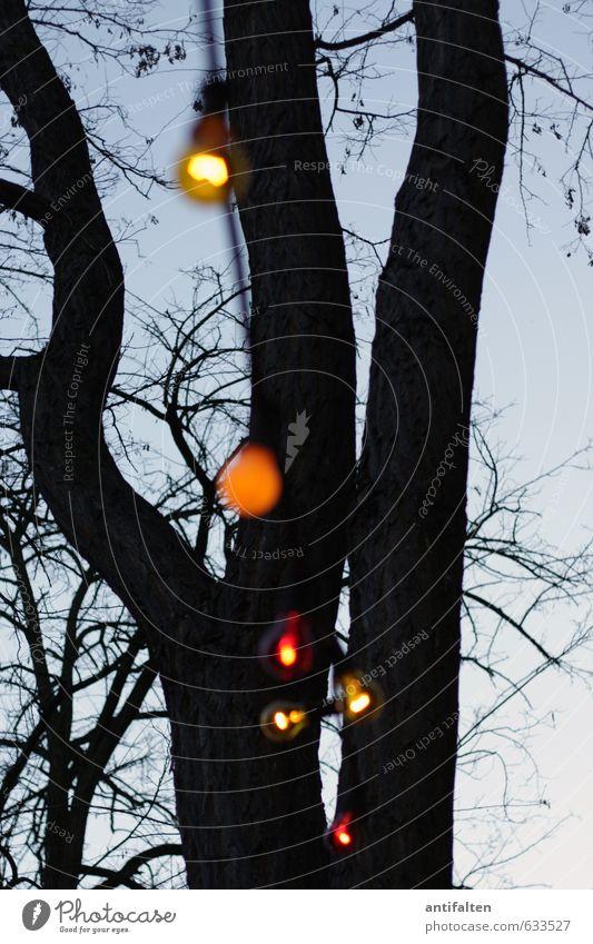Birnbaum Natur Sommer Baum rot Freude Winter schwarz gelb Frühling Feste & Feiern Party Freizeit & Hobby orange Tanzen Dekoration & Verzierung Schönes Wetter
