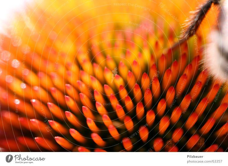 AUA-Flower Blume Freude Leben orange Spitze Hummel
