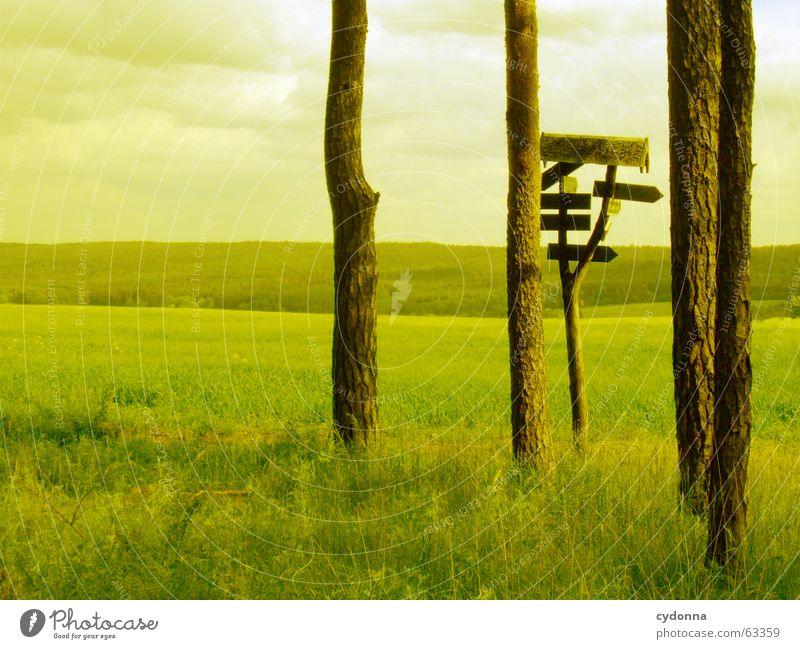 Wohin, mein Kind im grünen Kleid? Natur Himmel Sommer Ferne Farbe Wald Wiese Gefühle Berge u. Gebirge Freiheit Wege & Pfade Denken Landschaft Stimmung Feld wandern