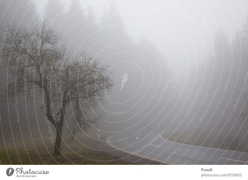 Wetter (101) Natur Landschaft Winter Nebel Baum Wald Straße dunkel grau Endzeitstimmung Schilder & Markierungen schlechte Sicht Kurve Farbfoto Außenaufnahme