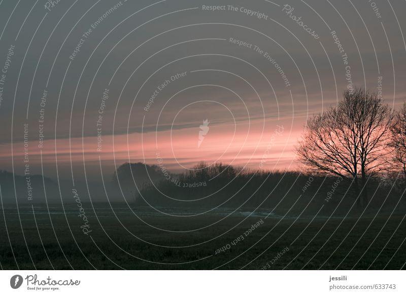 __T Natur Landschaft Erde Himmel Wolken Horizont Sonnenaufgang Sonnenuntergang Winter Nebel Baum Sträucher Seeufer Stimmung ruhig Müdigkeit Sehnsucht Erwartung