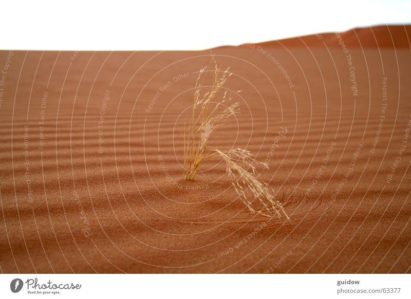 und dem wind winke ich mit letzter kraft ... Pflanze Sand braun Kraft Wellen Wind Kreis Wüste Dürre widersetzen