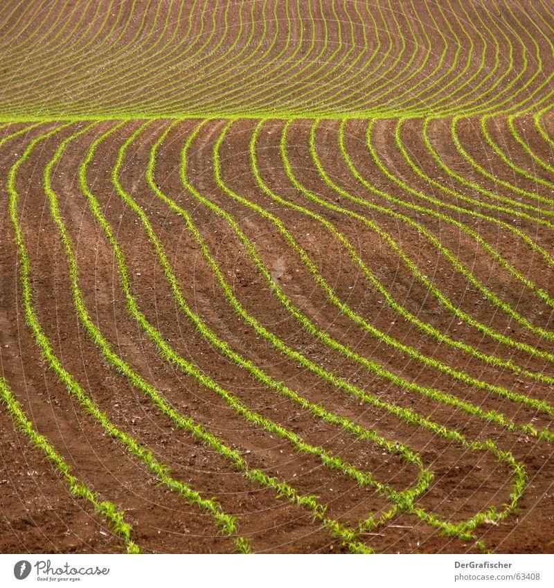 Bauernkreativbewegung grün Pflanze Freude Frühling Bewegung springen Linie braun Arbeit & Erwerbstätigkeit Erde Wellen Feld außergewöhnlich Wachstum frisch Ernährung