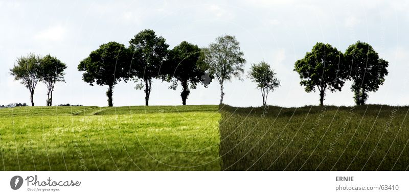 Böömsche Natur Himmel Baum grün Wolken Gras Feld Deutschland Landwirtschaft Verschiedenheit
