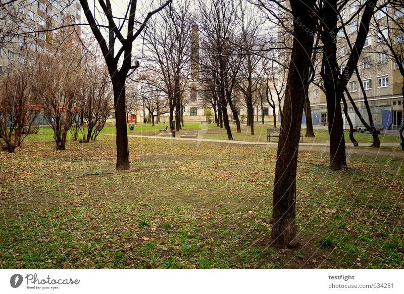 some kinda trees Baum Garten Park Wiese Stadt Hauptstadt Stadtrand Menschenleer Häusliches Leben trist Einsamkeit kalt Langeweile Plattenbau herbstlich Winter