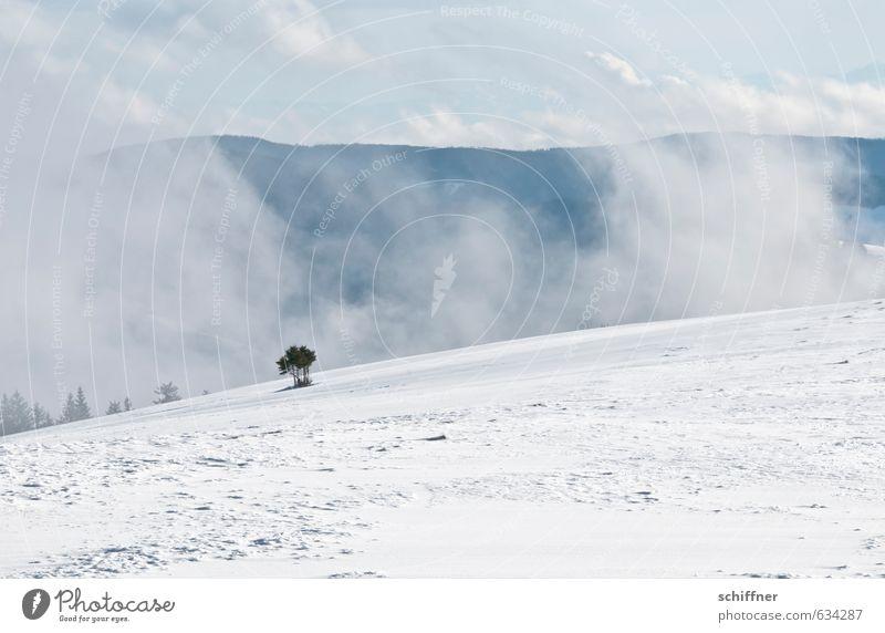 Allein Umwelt Natur Landschaft Winter Klima Wetter Schönes Wetter Nebel Eis Frost Schnee Pflanze Baum Wald Hügel Gipfel Schneebedeckte Gipfel kalt blau grau