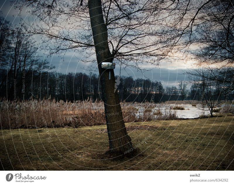 Rückblende Umwelt Natur Landschaft Pflanze Himmel Wolken Horizont Klima Wetter Schönes Wetter Baum Gras Wald Teich dunkel Spiegel Sicherheit Zweige u. Äste karg