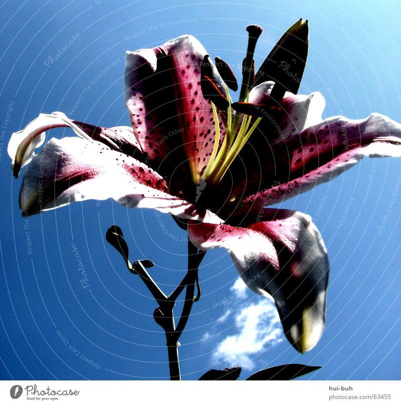 fleischfressendepflanze? Blume Frühling Hoffnung Lilien Freiheit Duft blue Leben