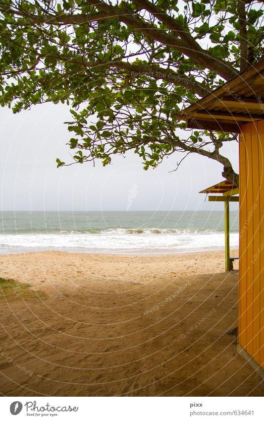 für raimund und fausto grün Wasser Baum Erholung Landschaft ruhig Tier Strand Ferne gelb Küste Frühling Schwimmen & Baden Sand gehen liegen