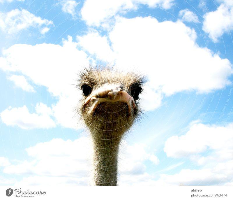 Immer schön Augenkontakt halten Himmel Wolken Tier Mund Vogel Blick Neugier beobachten Blumenstrauß Kontrolle böse Interesse ernst Laune