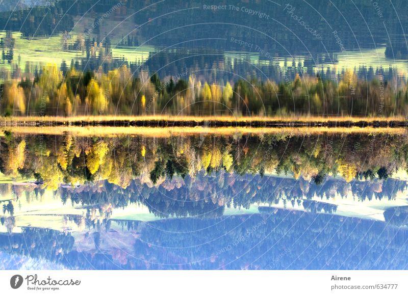 doppelt seen Natur Landschaft Wasser Herbst Schönes Wetter Wald Alpen Berge u. Gebirge Seeufer Walchsee Bundesland Tirol Österreich mehrfarbig ruhig ästhetisch