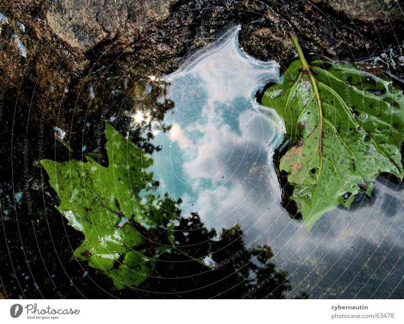 Pfütze Wolken Blatt Hoffnung poetisch Zukunft Vergänglichkeit Verfall Reflexion & Spiegelung Regen Wetter Wasser Stein Himmel Ende Beginn Natur