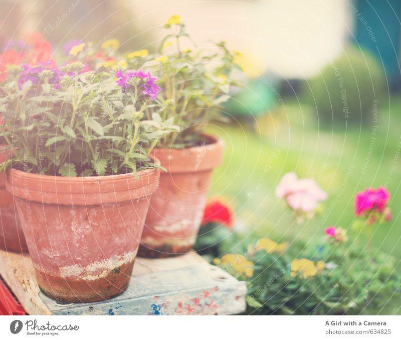 bald Natur Pflanze Frühling Sommer Blume Blüte Garten Blühend Wachstum mehrfarbig Blumentopf Dekoration & Verzierung Farbfoto Außenaufnahme Nahaufnahme