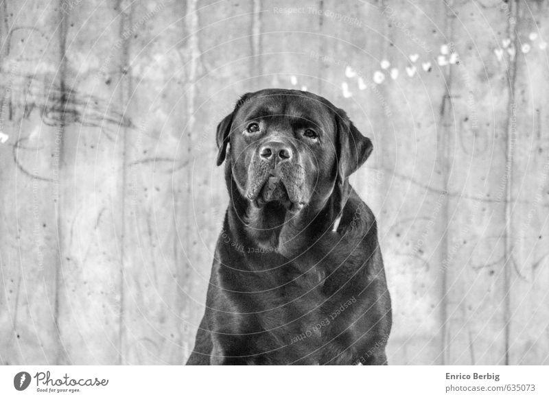 Dog - Hund - Labrador - Retriever Einsamkeit Tier Gefühle Liebe Glück Stimmung Zufriedenheit leuchten beobachten einzigartig Freundlichkeit Lebensfreude Trauer