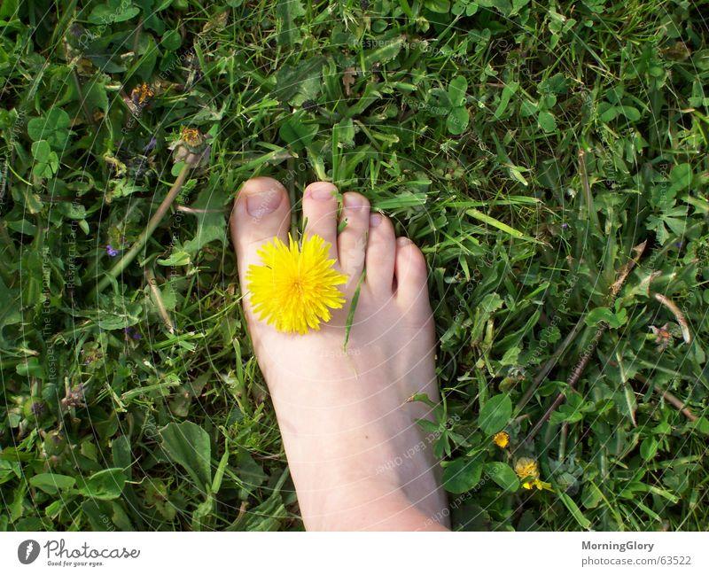 endlich frühling Sommer Frühling Wiese Blume Löwenzahn Rasen Fuß
