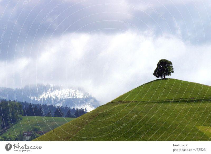Wer den gepflanzt hat..... einzeln Baum Hügel Wiese Gras grün Wolken Berge u. Gebirge Alpen Schnee