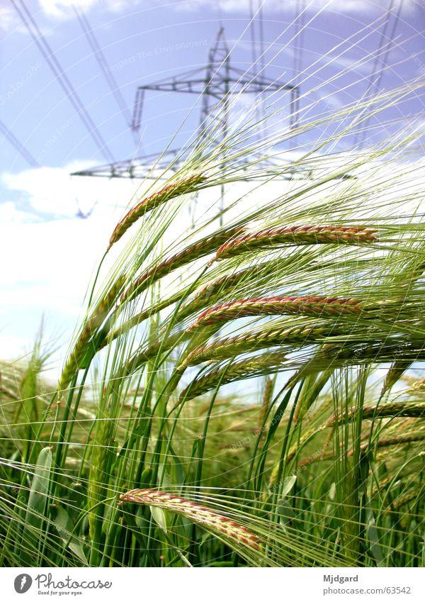Energieträger grün blau Kraft Feld Energiewirtschaft Elektrizität Getreide Korn Strommast