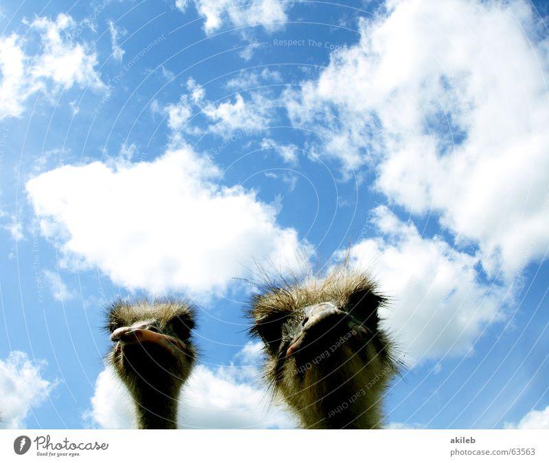 Big Brothers (Sisters) Himmel Wolken Auge Tier Vogel Perspektive Neugier beobachten Blumenstrauß Kontrolle Interesse ernst Laune Überwachungsstaat Launisch Schlechte Laune