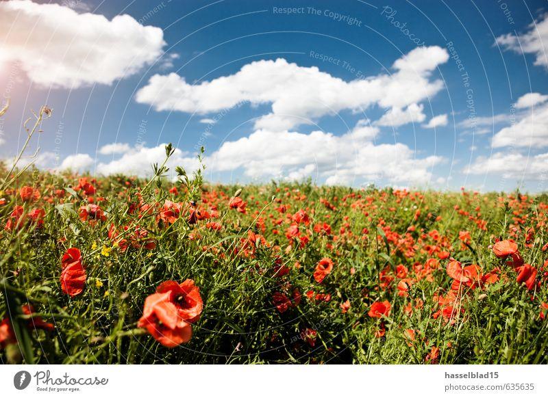 MOHN-LANDUNG Ferien & Urlaub & Reisen Pflanze Sommer Erholung ruhig Wolken Freude Leben Gesundheit Glück Freiheit Zufriedenheit Tourismus Ausflug Blühend