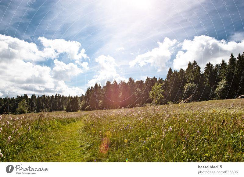 summertime Ferien & Urlaub & Reisen Pflanze Sommer Erholung Landschaft ruhig Freude Tier Umwelt Leben Gras Glück Gesundheit Lifestyle Zufriedenheit frisch