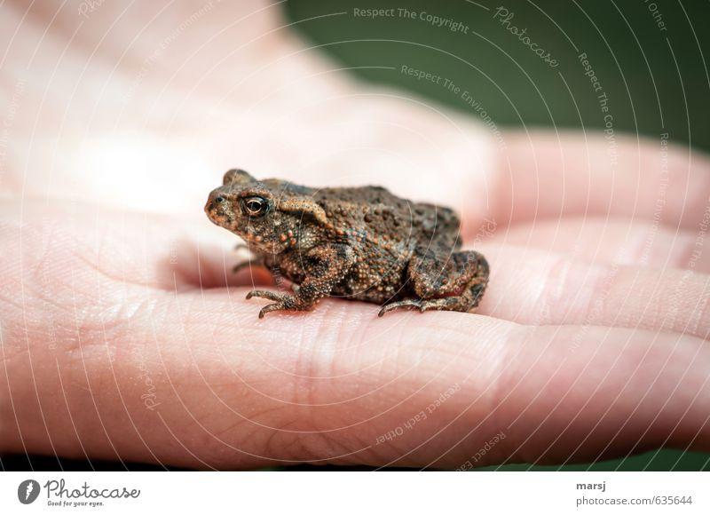 Lieber einen Frosch in der Hand... schön grün Sommer Einsamkeit Erholung Tier kalt Tierjunges Frühling klein natürlich braun träumen liegen Wildtier