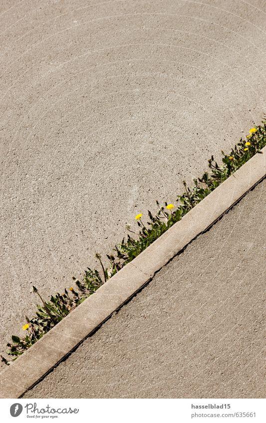 randstreifen Ferien & Urlaub & Reisen Pflanze Sommer Blume Ferne Spielen Frühling Freiheit Gesundheit Freizeit & Hobby Tourismus Ausflug Fitness Blühend