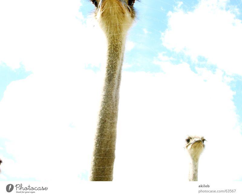 Hals Himmel Tier Wolken Auge Vogel beobachten Neugier Blumenstrauß Kontrolle Interesse ernst Laune Überwachungsstaat Launisch Schlechte Laune