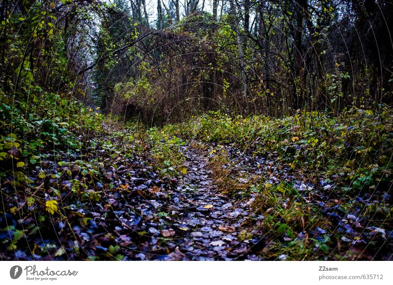 waldweg Natur Pflanze grün Baum Landschaft Blatt dunkel Wald kalt Umwelt Herbst Wege & Pfade Nebel Sträucher Perspektive violett