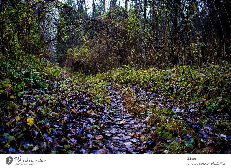 waldweg Umwelt Natur Landschaft Herbst schlechtes Wetter Nebel Baum Sträucher Wald dunkel gruselig kalt grün violett Perspektive Surrealismus Wege & Pfade Blatt