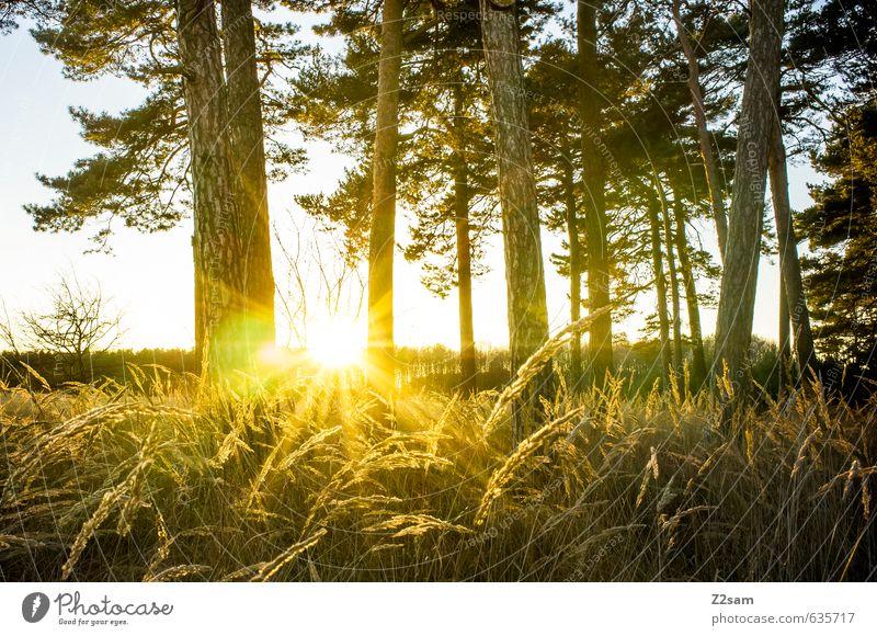 Feierabend Natur Sonne Baum Erholung Landschaft ruhig Wald Umwelt Wärme Herbst Gras Freizeit & Hobby Idylle Sträucher Klima frisch
