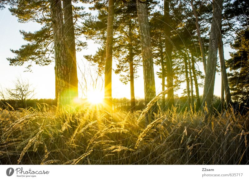 Feierabend Umwelt Natur Landschaft Sonne Sonnenaufgang Sonnenuntergang Sonnenlicht Herbst Schönes Wetter Baum Gras Sträucher Wald frisch Wärme Frühlingsgefühle
