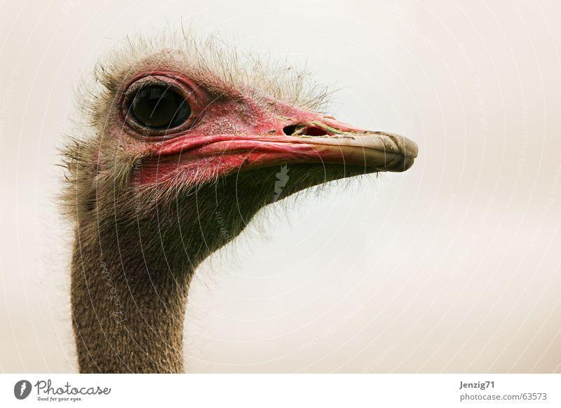 watchtower. Auge Vogel beobachten Blumenstrauß Schnabel Tier Laufvogel