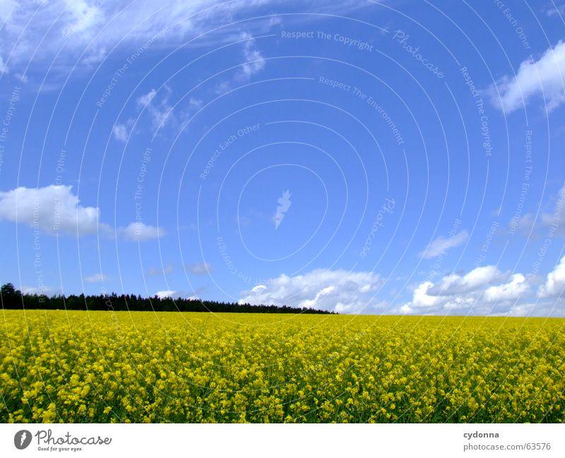 Rapsfeld Feld Blume Landwirtschaft Landleben Ackerbau Sommer gelb Wolken schön Wald rollen Ferne Gefühle Wohlgefühl träumen Reifezeit Frühling Landschaft