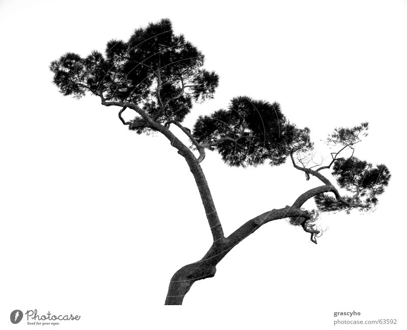 tree Baum Holzmehl