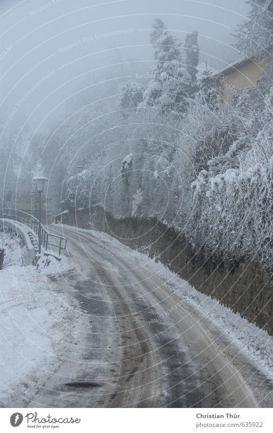 Kälteeinbruch weiß Baum ruhig Wolken Haus Winter dunkel Wand Straße Schnee Wege & Pfade Gebäude Mauer grau braun Schneefall